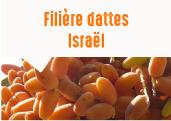 Les Dattes Medjool de Samar dans le sud Israélien