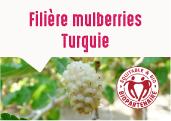 Les mulberries des Jardins d'Adiyaman en Turquie