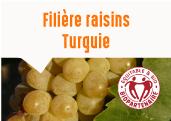 Les raisins de la plaine de Manisa en Turquie