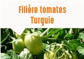 Les tomates séchées de la plaine de Manisa en Turquie