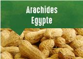Arachides coques grillées d'Egypte