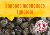 Bananes moelleuses de Cerecita en Equateur