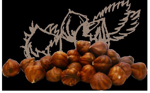 Des noisettes Akçakoca