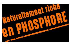 riche en phosphore