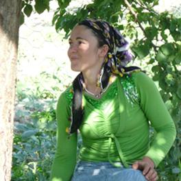 Récolte des abricots au sud de la Turquie