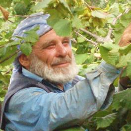 Hasan, cultivateur de noisettes en Turquie